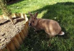 Кролик фоновые заставки скачать