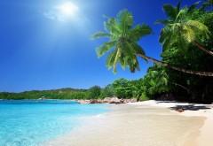 Песчаный пляж, пальмы, тропики, фоны, заставки
