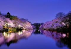 Япония, Осака, городской парк, озеро, лампа горит, ночь, …