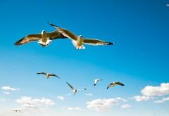 Чайки в небе фоновые заставки скачать на рабочий стол бесплатно