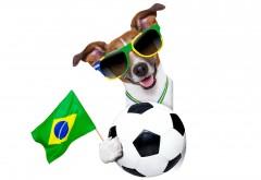 Собачка в очках с футбольным мячем заставки скачать