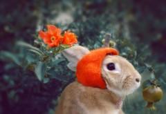 Кролик, милый пушистик, цветы, луг, обои hd, бесплатно