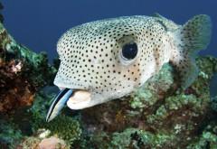 Фото рыбы в подводном мире обои hd бесплатно