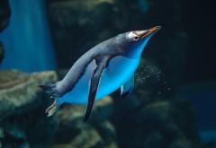 Подводный мир, пингвин в воде, водная фауна, обои hd, бес�…