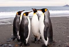 Четыре пингвина на пляже у моря обои hd бесплатно
