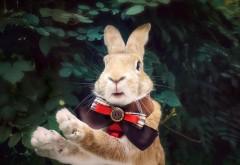 Праздничный кролик, обои hd, бесплатно, история, праздни…