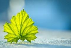 Широкоформатные обои hd бесплатно листок с дерева