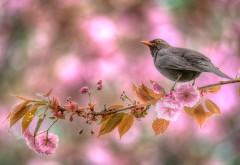 Весенние цветы, птица на дереве обои hd бесплатно высок�…