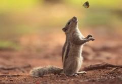 Белка, бабочка, дружба милый животных, обои hd, бесплатн�…