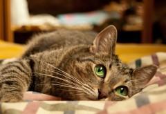 Фото прекрасной кошечки с красивыми глазками
