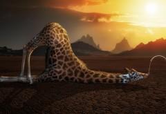 Смешной жираф прикольные обои hd бесплатно на рабочий с…