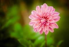 Цветы, цветут, цветок, макро, природа, обои hd, бесплатно