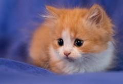 Котенок, пристально наблюдая, фоновые картинки, милые �…