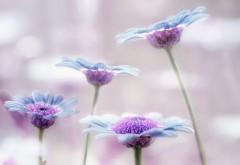 Цветы, макро, стебли, сиреневые, картинки, обои hd, беспл�…
