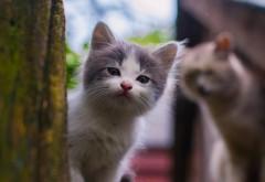 Котенок смотрит на вас обои hd для настольного компьюте…