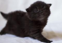 Котенок, черный, фотосессия, детеныш, милый, картинки, з…