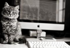 Черно-белые фото кота у компьютера рабочий стол обои