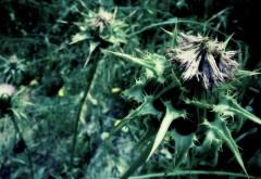 Цветок, шипы, зелень, картинки, hd обои