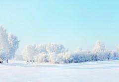 Обои hd, бесплатно, лес, зима, снег, деревья, пейзаж