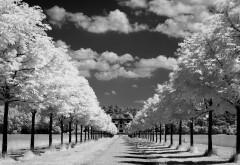 Черно-белые фото высокого качества дороги в даль