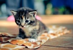 Котенок картинка для детей
