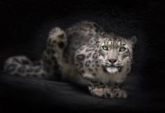 Заставки, зеленые глаза, рысь, барс, ирбис, снежный леопард, дикая кошка, бесплатно на рабочий стол