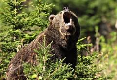 Медведь, животное, лес, hd заставки, картинки
