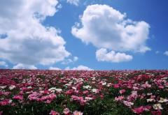 Цветочная поляна, луговые цветы, голубое небо, обои hd, бесплатно