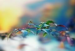 Макро заставки, листва, зелень, природа, обои hd, бесплат…