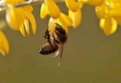Фото маленькой, работящей пчелки