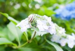 Улитки, зеленые растения, цветы, обои hd, бесплатно