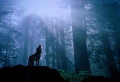 Волк в лесу воет на луну обои hd бесплатно