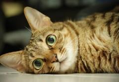 Фото милого, красивого котика