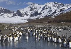 Пингвины, горы, берег, снег, небо, обои hd, бесплатно
