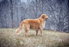 Собака, падающие снежинки, обои hd, бесплатно
