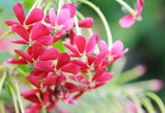 Цветы, красный, лепестки, макро, обои hd, бесплатно