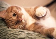 Широкоформатное фото милого кота