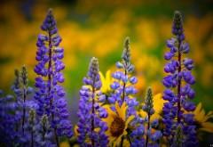 Вашингтон полевые цветы картинки на рабочий стол
