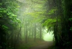 Зеленый туман, лес, дорога, сумрак, гуща, природа, hd обои, фоны