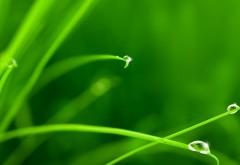 Трава, капли, роса, зеленый, макро, фоны, заставки