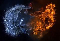 Огонь против льда, птицы, схватка, вода и огонь, абстрак…