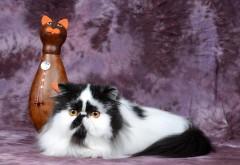 Персидский кот, статуэтка, кот, пятнистый, смешной, бол�…