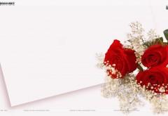 Свадебная открытка, цветы, картинки, праздник, обои hd, ш…