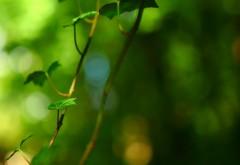 Зеленый лист, фон, листва, картинки для рабочего стола, …