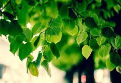 Зеленое дерево, листья, обои для рабочего стола