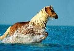 Удивительное фото великолепной лошади