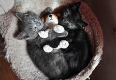 Котята, котики, игрушка, пушистики, дымчатый и черный к�…
