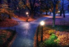 Природный парк, деревья, вечер, лес, свет, HD заставки, фо…