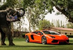 Lamborghini Aventador P700 4, оранжевый, вид спереди, отражение, сло�…