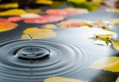 Красивая осень, природа, вода, дождь, листва, фоны, заст�…